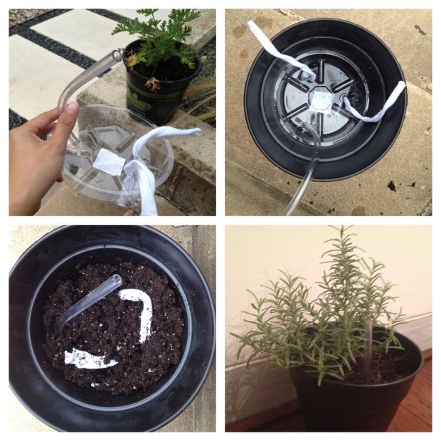 planter 2